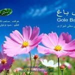 دانلود آهنگ محلی غمگین شیرازیمحسن صاحب کارگل باغ